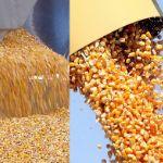 Цены на кукурузу в августе 2018 года