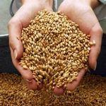 Цены на Пшеницу 3 класса Нового Урожая 2015 года!