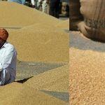 Цены на пшеницу в Индии в октябре 2018 года
