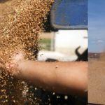 Цены на фуражное зерно в августе 2019 года
