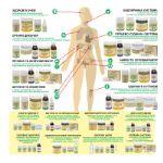 Препараты для каждой системы организма