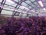 производство и продажа светодиодных фитосветильников