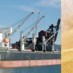СПОТ Контракт на поставку пшеницы в Китай