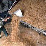 Цены на октябрь 2104 года: Пшеница 3 класса ГОСТ