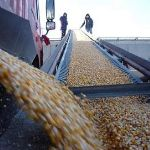 Цены на кукурузу 3 класса ГОСТ 13634-90 на FOB Ростов, Россия