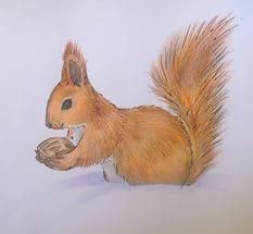 Добрая Белка — поставка фундка и грецкого ореха в скорлупе