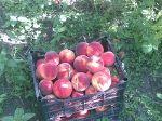 свежие ягоды, фрукты и овощи