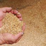 Цены на твердую пшеницу в августе 2018