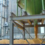 Поставки кукурузы на экспорт (август 2019)