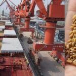 Цены на пшеницу в Китае в сентябре 2019 года