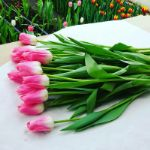 Тюльпаны Supermodel