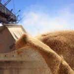 Цены на пшеницу в Сирии (на январь 2019 год)