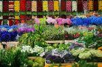 ЦветыОпт — живые цветы