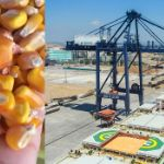 Цены на кукурузу в Иране