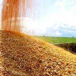 Извещение о поступлении кукурузы 1 класса
