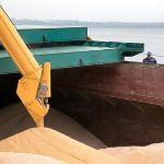 Цены на пшеницу в порту Новороссийск