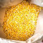 Цены на кукурузу в Китае в сентябре 2018 года
