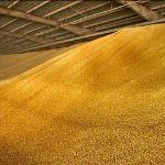 Цены в июне 2015 года на кукурузу в Узбекистане