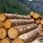 продаем ценные породы древесины для мебельных фабрик