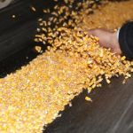 Цены на кукурузу в Китае в январе 2019 года