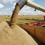 Цены на август 2014 года: Пшеница фуражная 5 класс