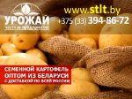 семенной картофель оптом из Беларуси