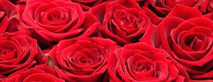 Розы в Москве