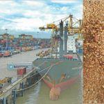 Поставки пшеницы в Бангладеш на июль 2019 год