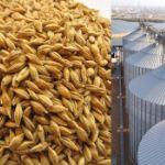 Продажа ячменя 16000 тн нового урожая 2019