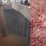 СПОТ Контракт!!! Лен масличный 24000 тн на ФОБ Россия.