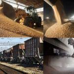 Цены на пшеницу в Китае в июне 2018 года