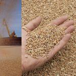 Цены на пшеницу с поставкой во Вьетнам