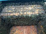 мед, продукты пчеловодства