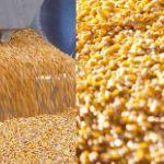 Цены на кукурузу в июне 2019 года