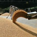 Цены на пшеницу 3 класса с доставкой в порт Александрия, Египет