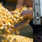 Цены на кукурузу в Иране в июне 2019 года