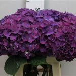 прямые поставки цветов
