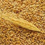 Цены на пшеницу с 10 октября 2015 года в Иране