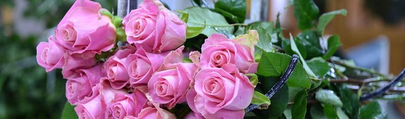 Розы Эквадора.