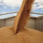 Извещение о поступлении пшеницы 3 класса