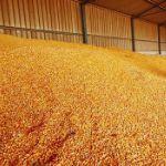 Цены на кукурузу в апреле 2019 года