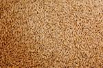 Пшеница продовольственная 3 класса